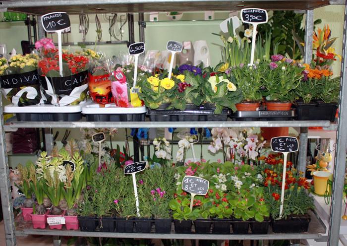 FLEURISTE - Spécialités florales - Nettoyage de tombe