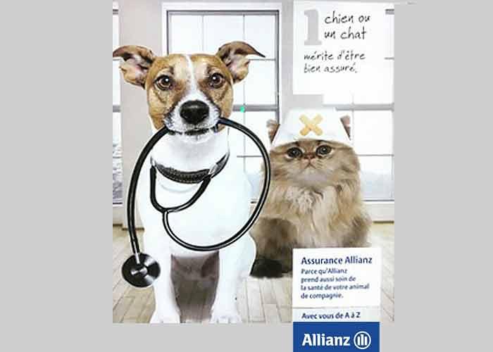 Allianz Cavalaire - Assurance chien chat